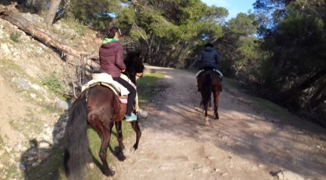 It was all smiles and pure joy from Mario and Niki with  www.horseridingelchorro…