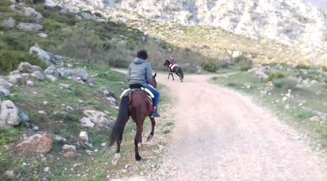 Whatever your riding experience www.horseridingelchorro.com will take you on a t…
